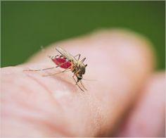Hospitals In Delhi To Treat Dengue Patients First, Postpone Non-Critical Surgeries
