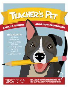 Teacher's Pet: Back to School adoptions