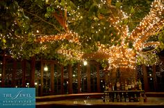 Tree Bar at the Jewel Dunn's River Resort
