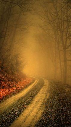 Mystique Forest Landscape.