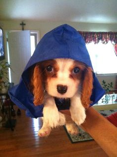 Ready for the rain... I need one of these for my pupppy :)
