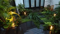 subtropical garden design - Google Search