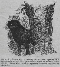 'The Exmoor Beast' by Trevor Beer. Source: Fortean Times magazine, No. 44, pg 29.