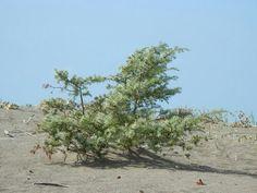 Dieser Baum ist kleiner als ein Meter
