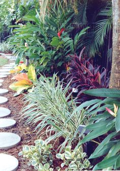 Get guidelines for enjoying a good looking Tropical Garden, surroundings, or front yard. Our specialists let you know all the essentials to actually Tropical gardens Florida Landscaping, Florida Gardening, Tropical Landscaping, Landscaping With Rocks, Front Yard Landscaping, Landscaping Design, Landscaping Software, Florida Plants, Tropical Garden Design