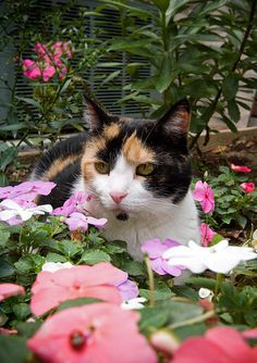 May Flowers: A Caturday Collection