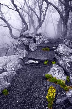 cedorsey:  Fog On The Betty's Rock Trail, Shenandoah National Park, VAPhoto Credit: (AppalachianViews.com)