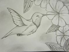 Humming bird scetch