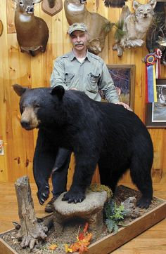 Full Body Bear Mount Ideas Black Bear Full Body Mount 4