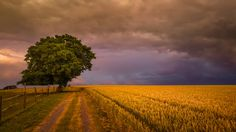 color frequency by Ralf Thomas