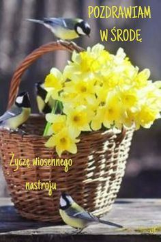 Coffee Flower, Yellow Cottage, Spring Sign, Spring Poem, Daffodils, Pretty Flowers, Beautiful Birds, Spring Flowers, Fine Art Photography