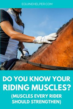 Muscles Used for Horseback Riding Horseback riding not only strengthens your horse's muscles, but it can also give your muscles a great workout as well!A highly involved physical activity, horseback riding engages muscles throughout your entire body. Learning about these muscles and how to care... Horseback Riding Tips, Horse Riding Tips, Horse Gear, Horse Exercises, Horse Care Tips, Riding Lessons, Horse Training, Horse Love, Reptile Cage