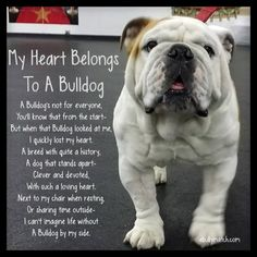 My Heart Belongs To A Bulldog A Bulldog's not for everyone, You'll know fromt the start- But when that Bulldog looked at me, I quickly lost my heart.  A breed with quite a history, A dog that stands apart- Clever & Devoted, With such a loving heart.  Next to my chair when resting, Or sharing time outside- I can't imagine life with out a Bulldog by my side.  ebullymatch.com