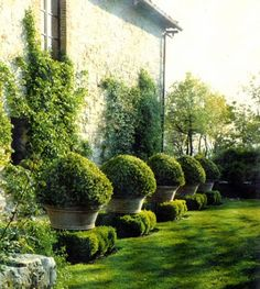 Lovely way to elevate boxwood while adding container contrast http://markdsikes.com/2012/07/11/garden-couture/