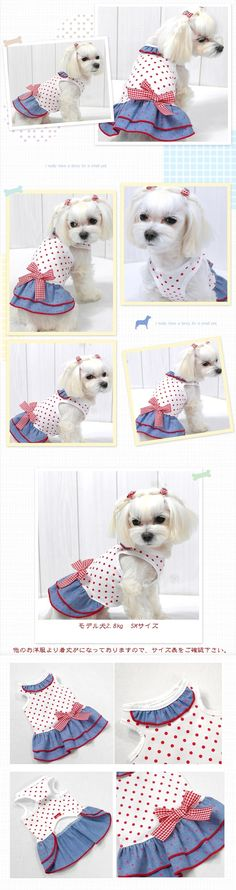 Such a pretty girl. Yorkie Clothes, Pet Clothes, Costume Chien, Dog Coat Pattern, Pet Dogs, Pets, Dog Clothes Patterns, Pet Boutique, Dog Jacket