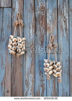 Garlic hangs on planks wall - stock photo Plank Walls, Slow Food, Planks, Columbia, Garlic, Royalty Free Stock Photos, Rustic, Illustration, Pictures
