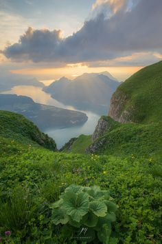 Green Paradise - ...