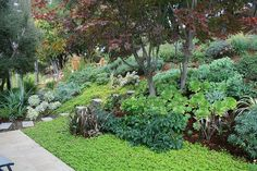 My first Oakland Hills Fire Zone Garden, planted in winter 2009 | Flickr - Photo Sharing!