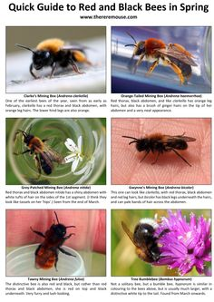 Bring on the Bees! Bees, Wordpress, Bring It On, Fish, Animals, Animales, Animaux, Bee, Animal