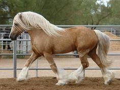 Irish Draft horse