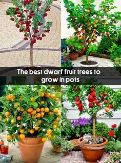 garden in pots A list of the important Miniature Fruit Trees in a limited space is as s: Dwarf apples tree is a sort of resilient and tough tree type that can bare freezing temperature of 45 degrees or less. Diy Garden, Fruit Garden, Garden Trees, Edible Garden, Garden Plants, Garden Landscaping, Veggie Gardens, Landscaping Software, Garden Cart