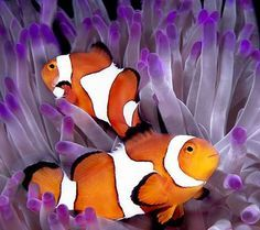 Another strange childhood obsession I had: clown fish and sea anemones. I'd imagine the anemones swallowing the clown fish.
