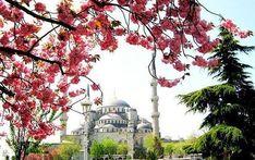Весна — один из самых прекрасных сезонов для путешествий в любую страну. Стамбул не стал здесь исключением. Туристов еще не так много, а погода уже радует. Конечно, не рассчитывайте, что будет очень жарко, но насладится приятным весенним солнцем и неспешными прогулками уже можно полноценно, как и осмотреть достопримечательности без длиннющих очередей.