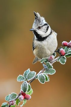 """wowtastic-nature: """" It's getting cold my little :) on 500px by Milan Krasula ☀  500✱750px-rating:95.1 """""""