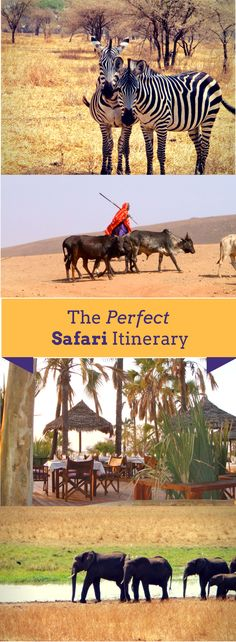 The Perfect Safari Itinerary for Tanzania through the Serengeti, Tarangire, Lake Manyara and the Ngorongoro Crater.