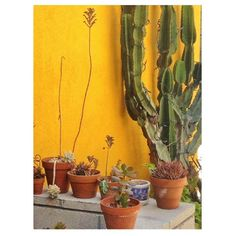 Photo by @happymundane on Instagram Growing Power, Outdoor Spaces, Greenery, Cactus, Surfing, Decor Ideas, Gardening, Exterior, Yellow