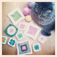 cat and crochet