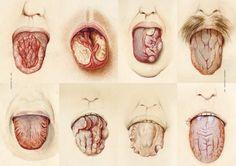 The Sick Rose: or; Disease and the Art of Medical Illustration: Richard Barnett: 9780500517345: Amazon.com: Books