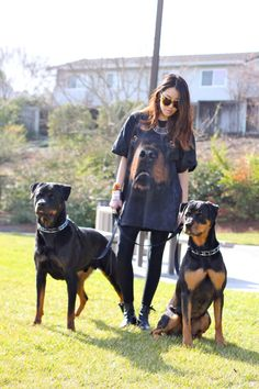 ~ These are the most beautiful, well-trained, elegant looking Rottweilers I have ever seen. Oh and the female, Diana Kang, holding them is pretty as well :) ~ #Rottweiler #Dog