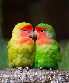 Image Result For Parrot Training Near Me