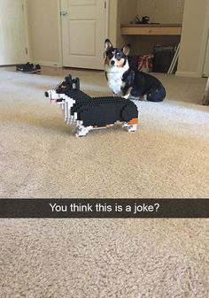 Hilarious Dog Snapchats