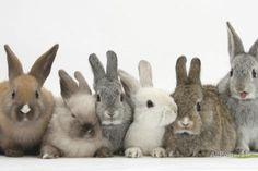 Six Baby Rabbits Fotodruck von Mark Taylor bei AllPosters.de