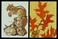 260-GC-Linda-K-Powell-ACORN-LEAF-CHIPMUNK-SQUIRR-EL-Greeting-Card-Set-of-Two