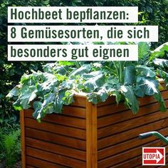 Hochbeet bepflanzen: Diese 8 Gemüsesorten eignen sich besonders If you are yours planted, there is a lot to consider. We show you which suitable for raised beds and how you use the space as effectively as possible. Garden Care, Landscaping With Rocks, Backyard Landscaping, Raised Garden Beds, Raised Beds, Outdoor Plants, Outdoor Gardens, Garden Types, Garden Landscape Design