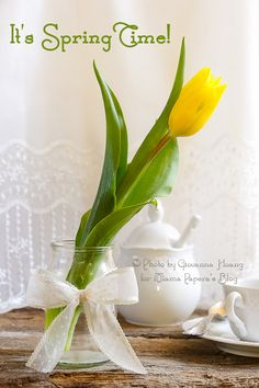 Decorazioni tavola #primavera