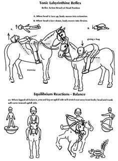 Hippotherapy & OT info to know  -  Tonic Labyrinthine Reflex