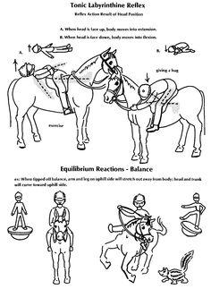 Hippotherapy & OT info to know  -  Tonic Labyrinthine Reflex
