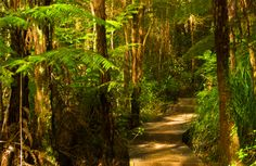 Riles Me Up: Runners Poo Okura Walkway Travel And Leisure, Auckland, Walkway, New Zealand, Planets, Hiking, Country Roads, Adventure, Green