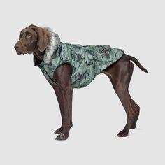 Dog Vest, Dog Jacket, Dog Winter Coat, Winter Walk, Cute Dog Clothes, Bulldog Puppies For Sale, Pet Fashion, Dog Costumes
