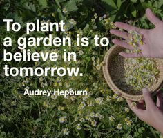 Famous herbalist quotes