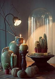 Shine the light on a cactus vignette.