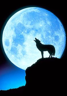 Blue moon and wolf