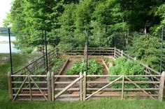 Outdoor & Garden: Great Garden Fence Ideas With Deer Fence And Wood Fence For Vegetable Garden With Planters Surrounded By Lawn And Trees For Traditional Landscape Design Small Garden Fence, Unique Garden, Small Vegetable Gardens, Backyard Vegetable Gardens, Veg Garden, Vegetable Garden Design, Garden Fencing, Fenced Garden, Garden Privacy