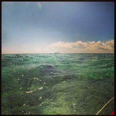 Ajax Reef