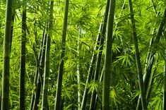 Bamboo clothing is making a name for itself, but how sustainable is it? Just because it comes from a plant doesn't automatically make it eco-friendly.