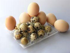 Cómo lograr que las gallinas pongan huevos | eHow en Español